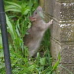 RAT CONTROL BOURNEMOUTH
