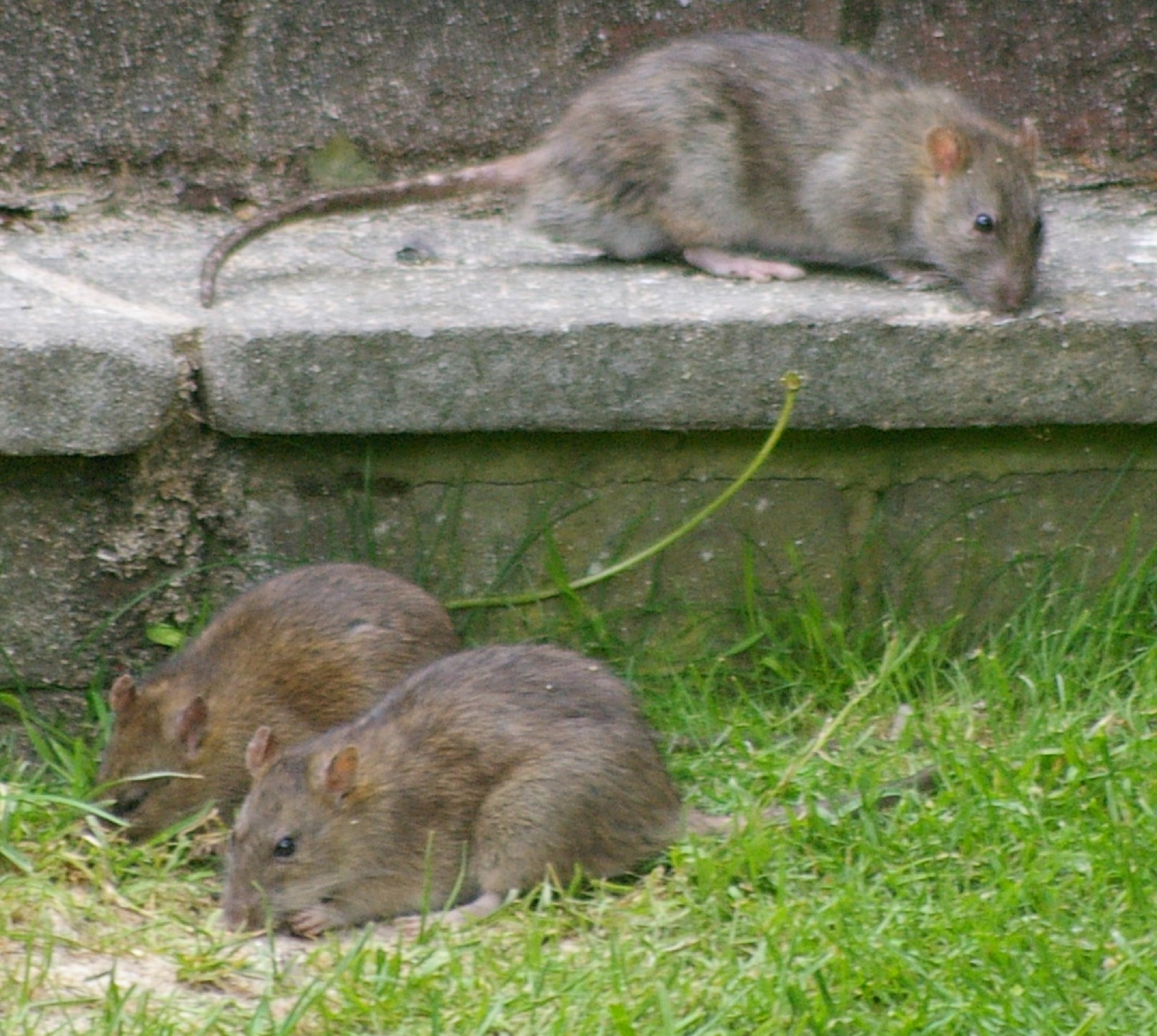 Pest Control in the Spring in Bournemouth Poole