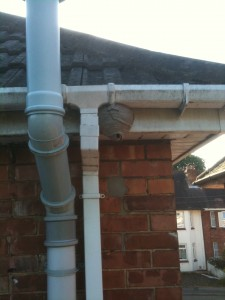 Wasp's nest on soffit