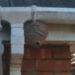 WASP NEST WASP CONTROL