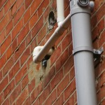 PIGEON HOLE in Bournemouth by No-Nonsense Pest Control