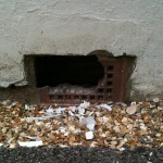RAT ENTRY THROUGH AIRBRICK IN BOURNEMOUTH BY NO-NONSENSE PEST CONTROL